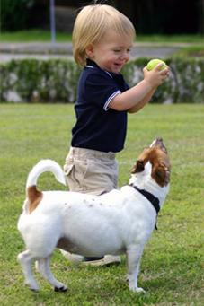 Toddler and dog playing