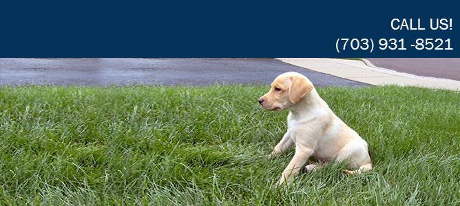 Best Behaved Dogs Llc