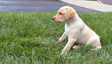 puppy-header-small.jpg