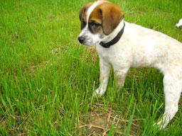 A puppy in the grass.