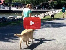 View our Dog Training videos on YouTube